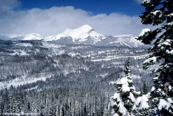 Winter Scene Honor the Energy of Winter