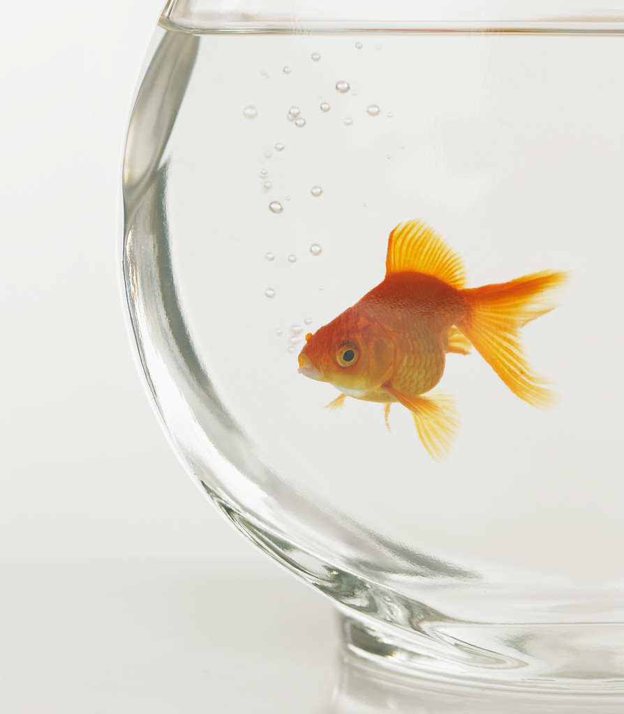 Goldfish 21 Tales for Our Times How Fish Helped Elizabeth Find a Job