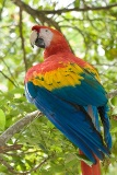 Parrot Tales for Our Times How Parrot Helped Shannon Deal with a Challenging Boss