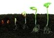 Seeds1 Move Forward
