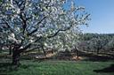 Tree 3 Divine Nature