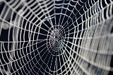 Spider Web Tales for Our Times What a Gigantic Black Spider and a Sunflower Taught Me (Part 1)