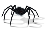 Spider Tales for Our Times What a Gigantic Black Spider and a Sunflower Taught Me (Part 1)