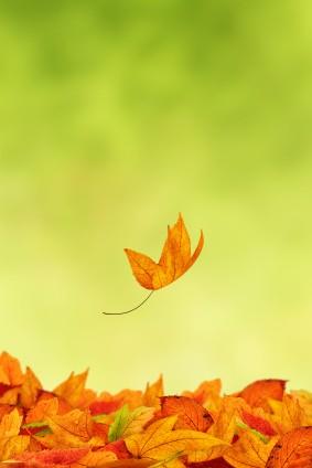 Leaf Falling e1339122192554 The New