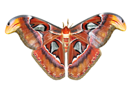 Moth 1 Tales for Our Times What Moth Taught Me about Marketing